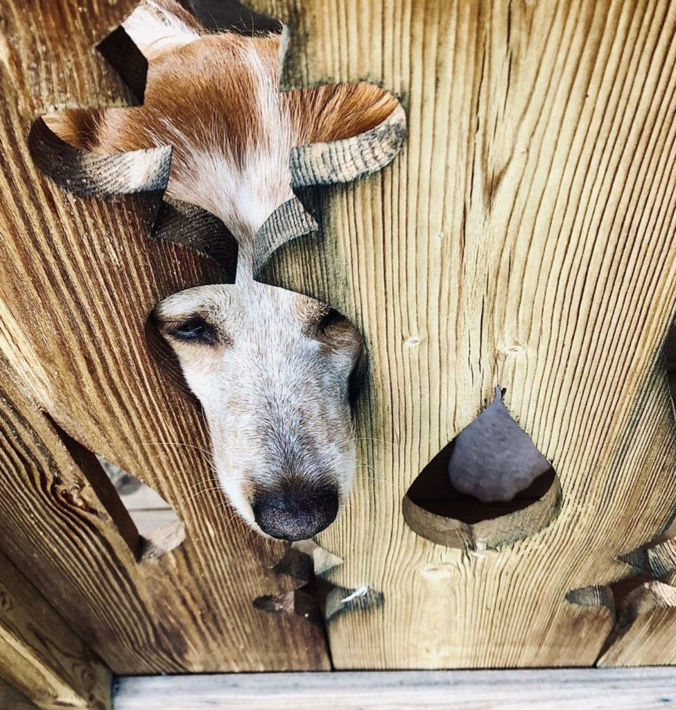 hund steckt seine Nase durch den Zaun