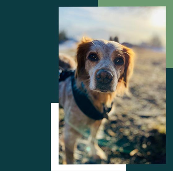 Hund wartet auf Nachrichten Post oder Kontakt